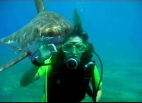 shark photobombing people swimming with sharks around them 600x436