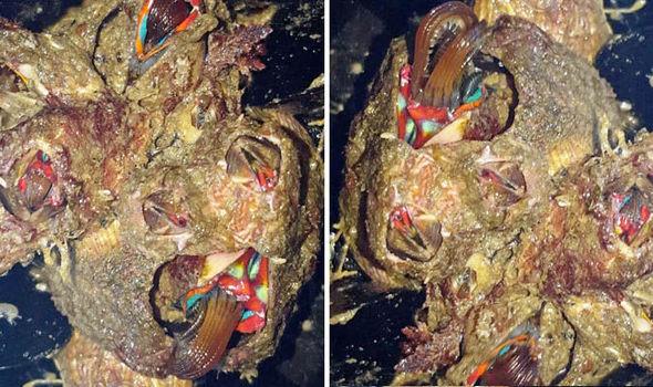barnacle sea monster alien discovered crab fisherman
