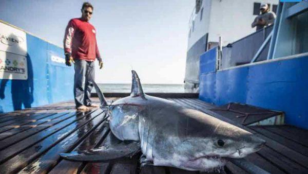 Jannick Schroder encountered 2 sharks 600x338