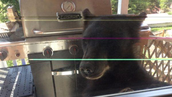 bear breaking in family home 600x338